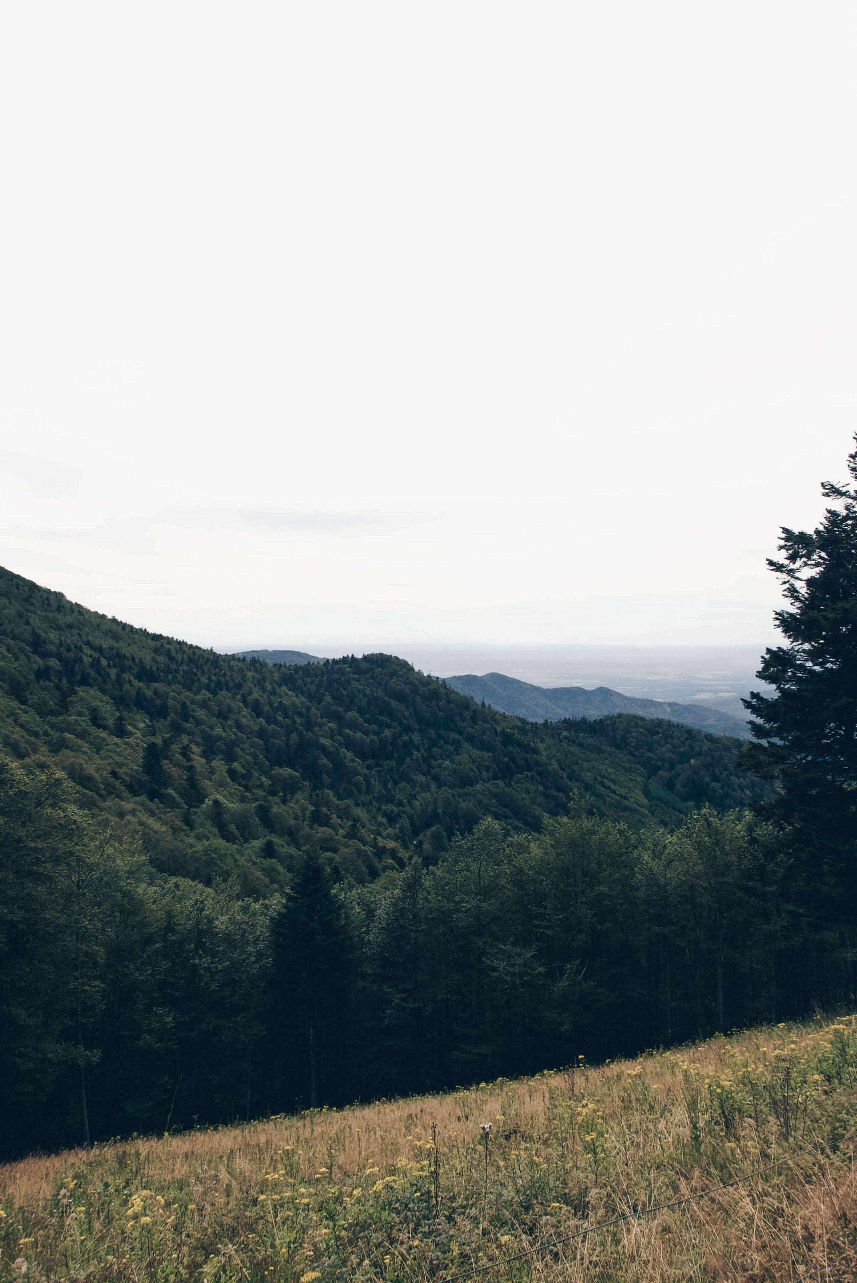 Les Vosges 18
